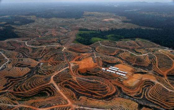 A Borneo forest is cleared to develop a palm oil plantation   (Picture: BAY ISMOYO/AFP/Getty Images)